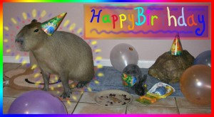 My 1st birthday with my co-pets.