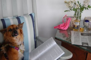 @elguapito reading Celeste and the Giant Hamster. What a cozy setup for an adorable dog!