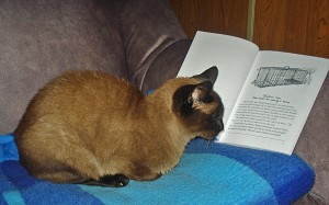 Christy the Cat reading Celeste (Hope she's not mad about Phukat character)