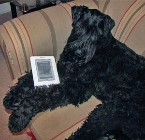 "@IamZorro with ""Celeste"" on Kindle"