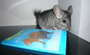 Roo of @jk_chinchilla reading Celeste