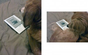 @srharris19's dogs reading Celeste on a Kindle