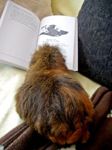 Cheeks looks like he's enjoying the book, his fur is poofed up.