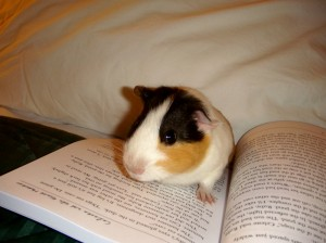 Winston Pig reading Celeste & the Giant Hamster
