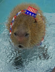 Me shaking in the pool. That hat was on pretty tight.