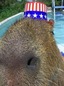 Patriotic whiskers.