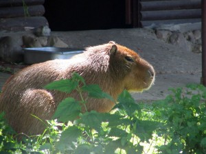 One of my cousins at the Moscow Zoo