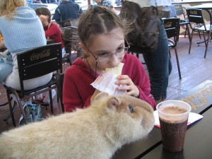 I'm pretty sure the stuffed capybara does not approve of Lina's food choice.