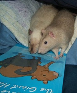 Duds & Spuds or Rocko & Zorro. Rats get very caught up in pretty pictures.