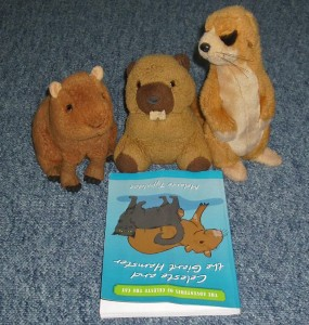 Three stuffed animals (including an adorable capybara) owned by Martin Gobbin