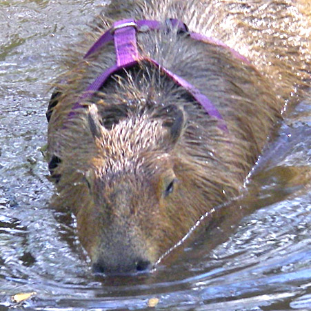 Me in Capybara Creek.