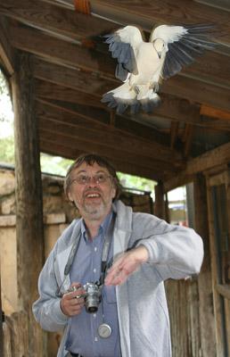 Rezoner with an Australian Pied Dove