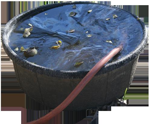 My frozen water bowl