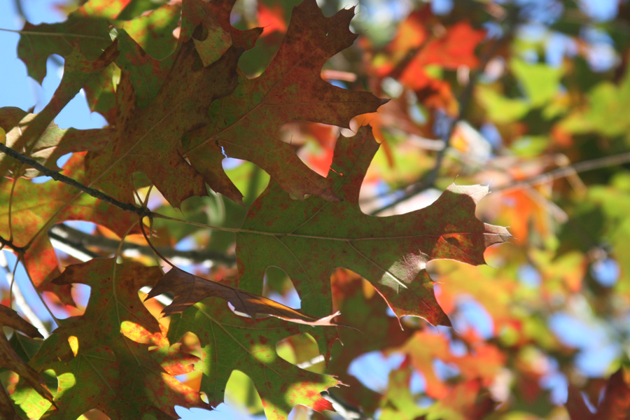 2009_12_05_04_Leaves