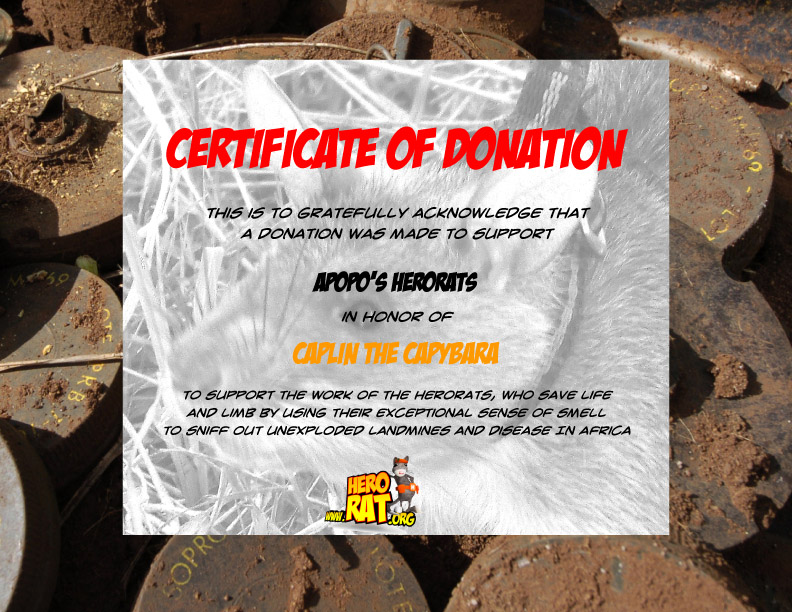 My Certificate from Hero Rats