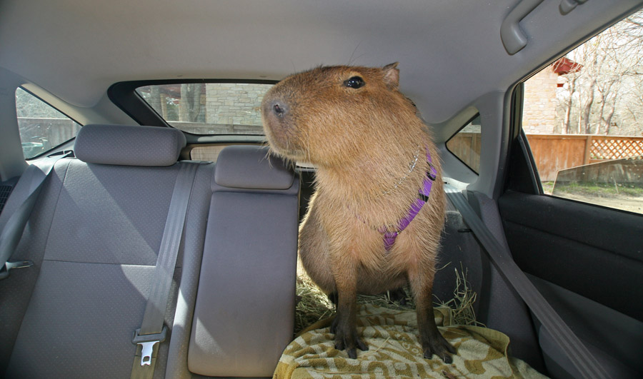 Me riding in the car
