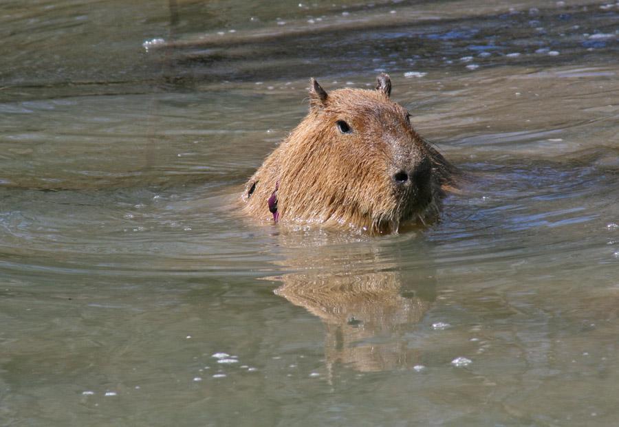 Me in Capybara Creek