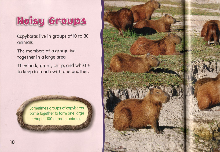 Interior page of Capybaras: The World's Largest Rodent