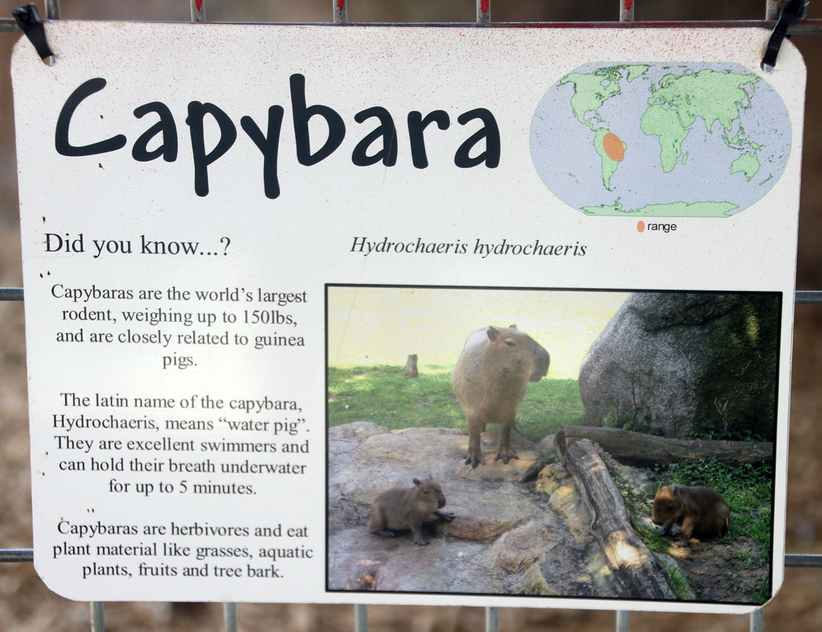 Capybara sign