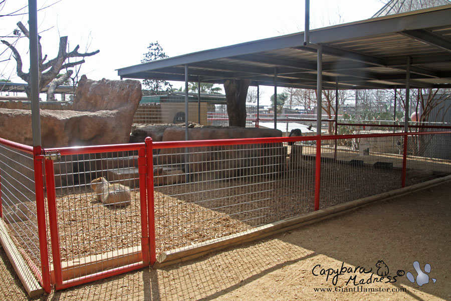Capybara enclosure