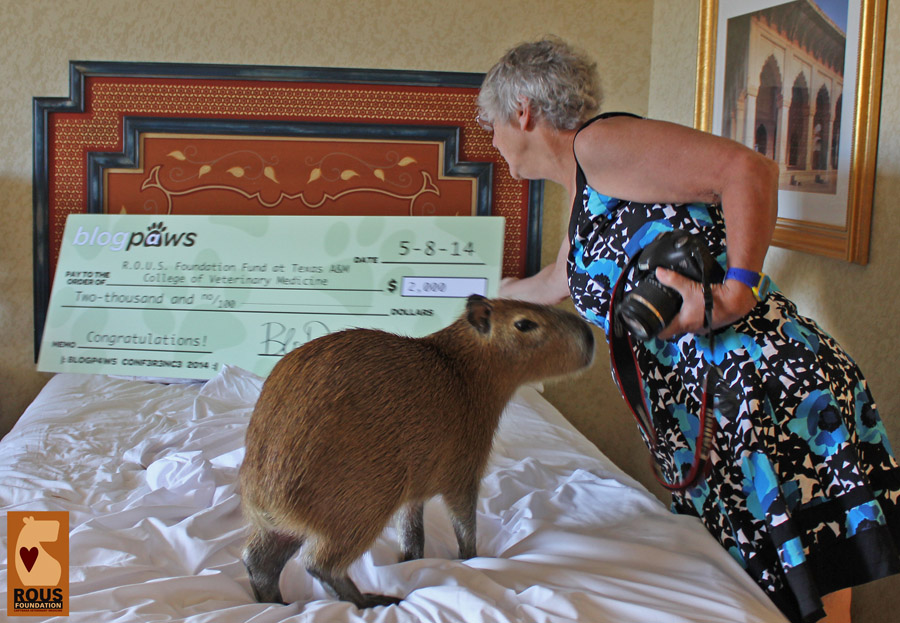 Posing the capybara