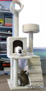 Dritwood on his cat tower