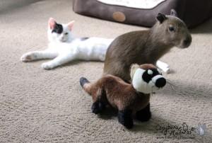 I am a ferret.