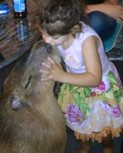 Chico Capybara was a gentle giant