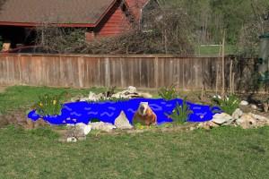 Capybara emerging from a cartoon pond