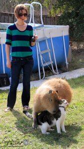 Capybara (Garibaldi Rous) hugging Cat (Flopsy)