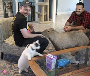 People petting capybara with white and black cat on coffee table