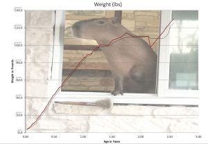 Graph showing the growth rate of a capybara