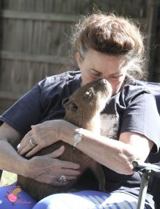 Older woman snuggling a baby capybara