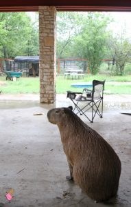 Skipper Rous looking out from the porch at the rain