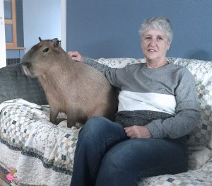 Woman and capybara sitting on a couch
